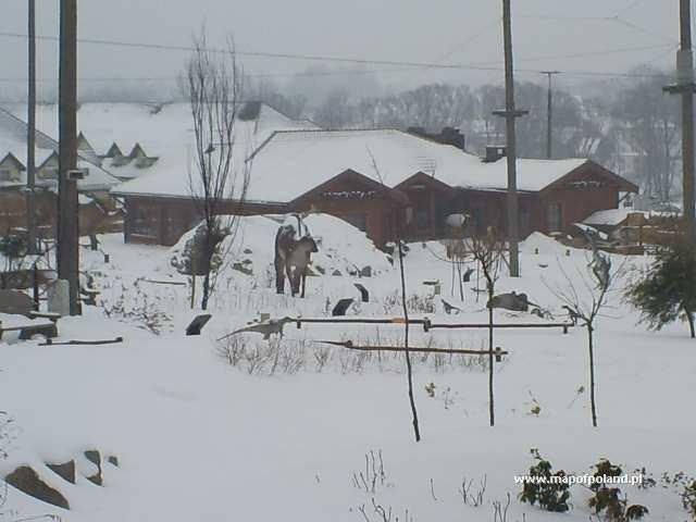 DINOLANDIA - Park Rozrywki zimą - Inwałd