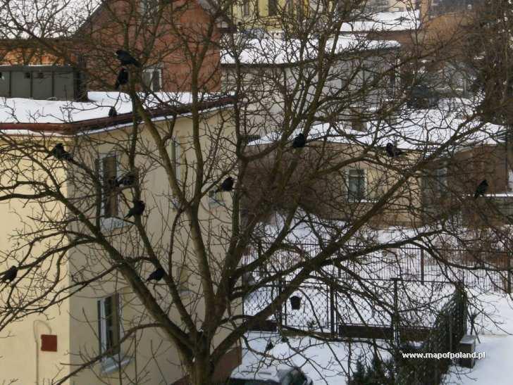 Zimowe ptaki - Pruszków