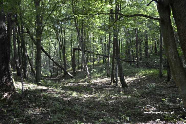 Natura, okolice Mycyny - Mycyny