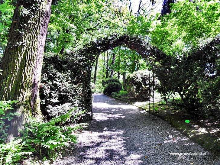 Ogród Botaniczny Arboretum Wojsławice Zdjęcie 122286