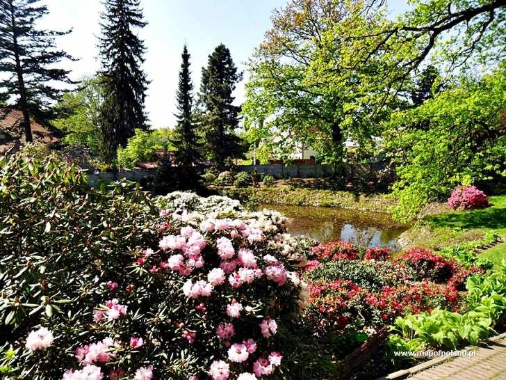 Ogród Botaniczny Arboretum Wojsławice Zdjęcie 156286